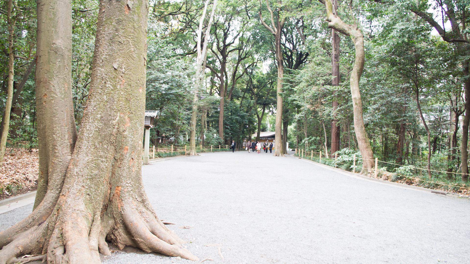 明治神宮参道の木