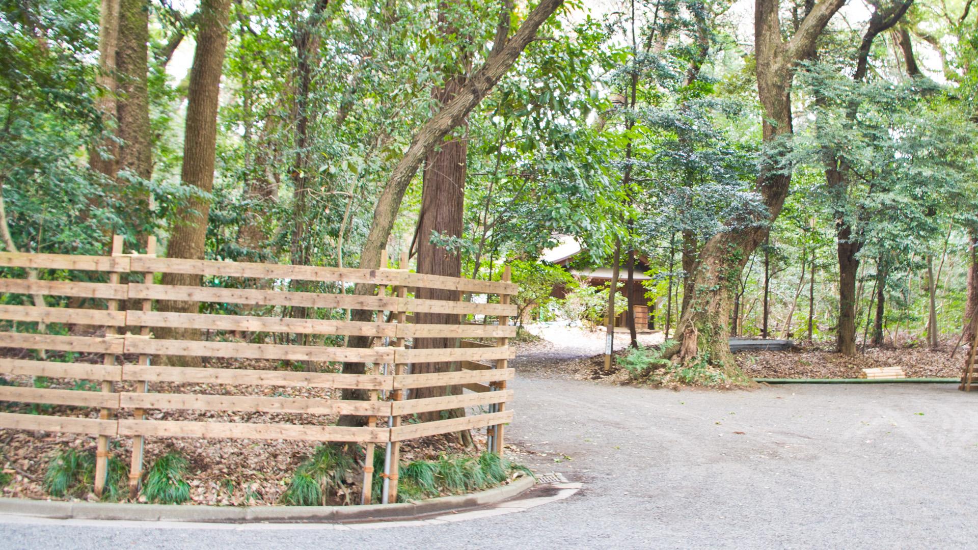 明治神宮 参道の林