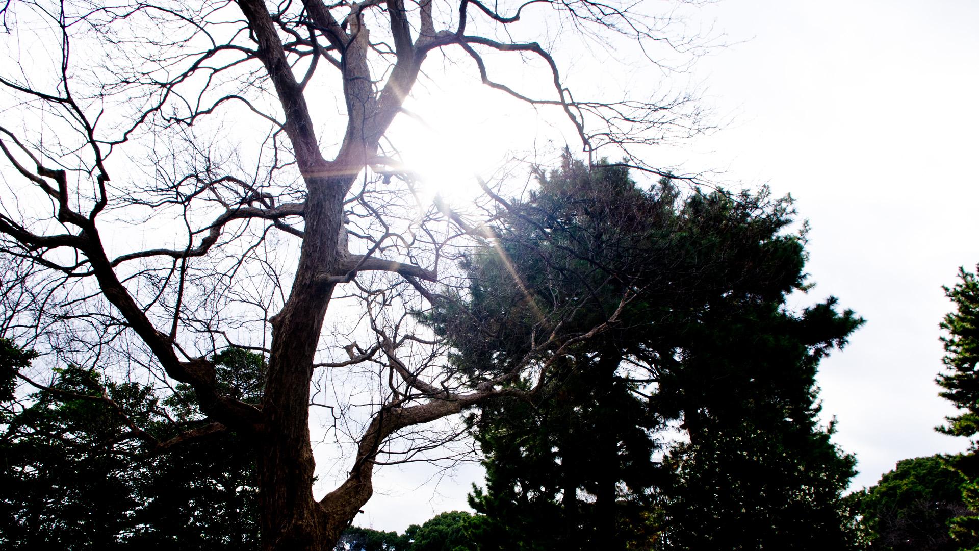 皇居広場の冬の陽