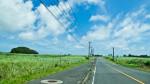 きび畑と道