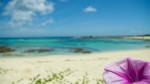 土盛海岸と花
