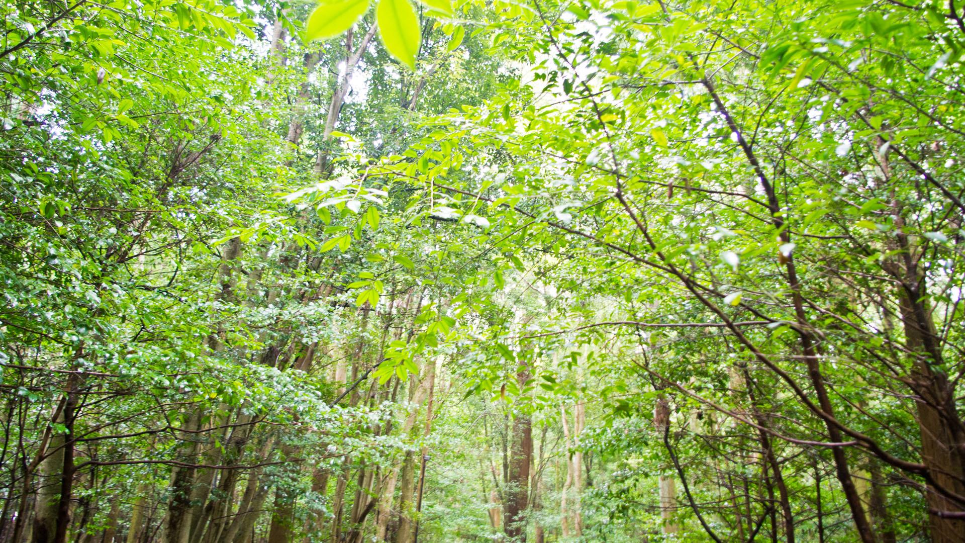 伊勢神宮の自然の森